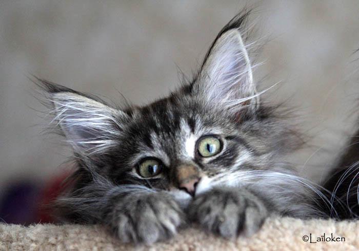 Nos chatons - Chaton marrant ...